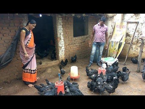 Ghar ki chhat par murgi palan   Part 5 - Bright poultry