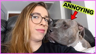 Annoying Things Dogs Do