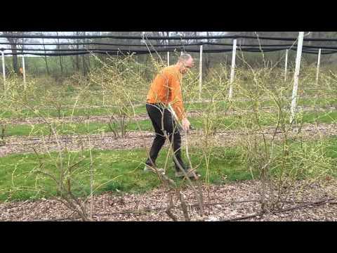 Příjem agricole suisse proti stárnutí