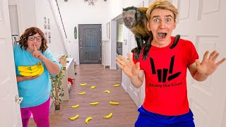 Who Put a MONKEY in MY HOUSE!?