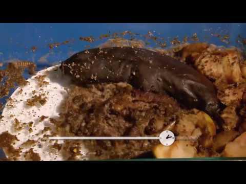 Ptsr sur les oeufs des helminthes