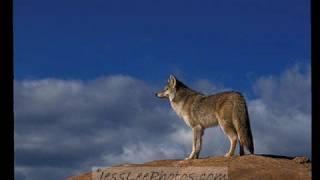 Coyote Moon Call Juan Manuel Vasquez