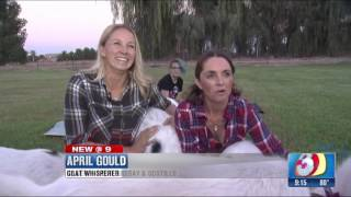 Goat Yoga Gilbert Arizona News Ch 3