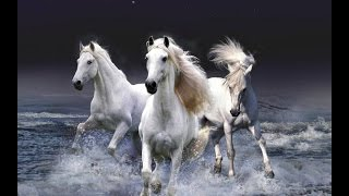 Wonderland Avenue - 'White Horses'