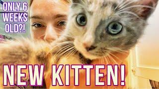 I Rescued a 6 Week Old Kitten 🐱💕