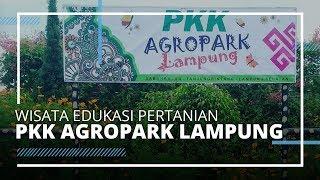 VIDEO TRAVEL| Wisata Edukasi Pertanian di PKK Agropark Lampung, Ada Taman Bunga Cantik
