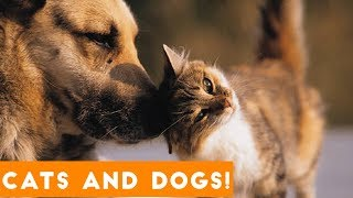Ultimate Cute Cats and Funny Dogs Compilation 2018 | Funny Pet VIdeos