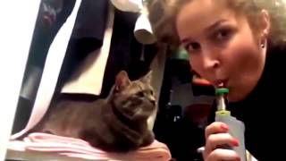 Приколы\Коты-котики-собачки!!!