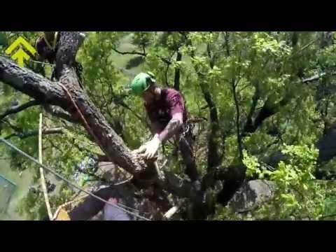 Riconoscere il collare di un ramo per una potatura corretta | SuPerAlberi