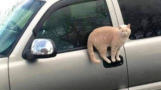 CATS make us LAUGH ALL THE TIME! - Ultra FUNNY CAT videos