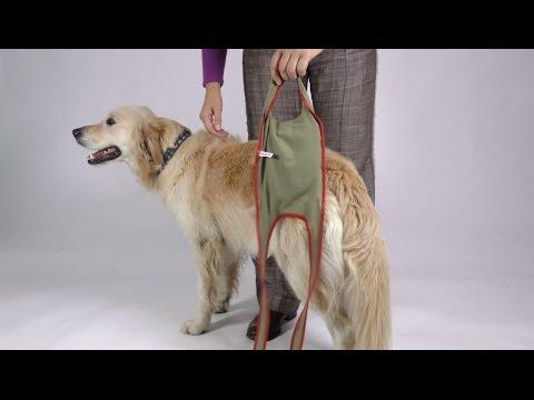 Anziehanleitung der piccobello Hundewindeln für grosse Hündinnen