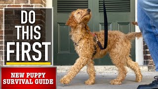NEW PUPPY SURVIVAL GUIDE: Leash Strolling Begins! (EP 4)