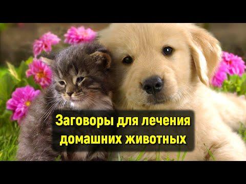 Заговоры для лечения домашних животных. Если ваше животное заболеет.