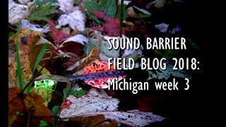 SOUND BARRIER FIELD BLOG 2018: Week 3 Michigan