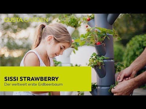 Mit SISSI STRAWBERRY Erdbeeren auf Balkon, Terrasse oder im Garten anbauen [Urban Gardening]