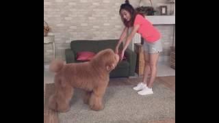 夏語心 : 第一次和狗狗做運動就上手 LOL
