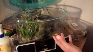 MUST SEE how to care for praying mantis.