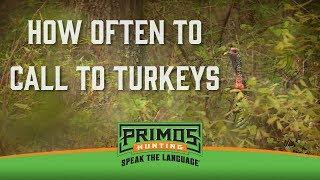 How Often to Call to Turkeys