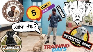 Training 6 Months Old Labrador In 5 Days    Sit    No    Eat    Come   