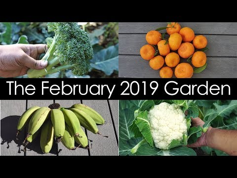 California Garden Tour - Februay 2019 - Gardening Tips, Harvests & Things To Do