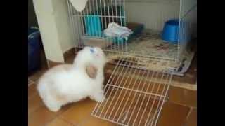 Yully (mini coelho fuzzy lop)