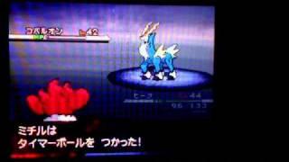 ポケモンブラック:つかまえた!光るコバルオン!PokemonBlack:shinyCobalon