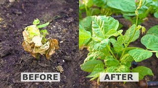Hyper Boost Plant Growth With Hydrogen Peroxide