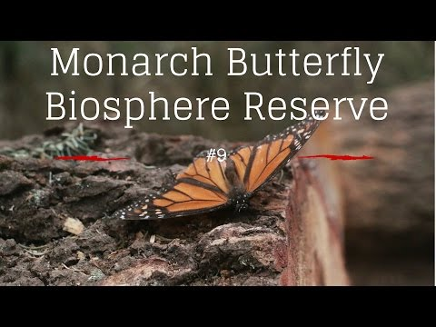 10 places to visit in Mexico (Monarch Butterfly Biosphere Reserve #9)