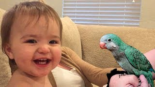 Baby And Parrot Are Best Friends Compilation