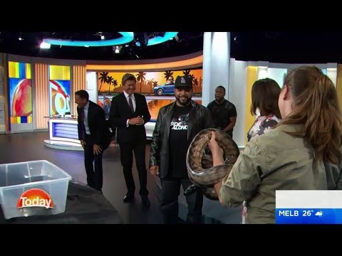 Kevin Hart freaks out over snake on The Today Show - Karl Stefanovic (видео)