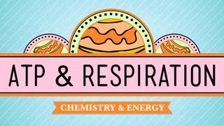 ATP&Respiration: Crash Course Biology #7