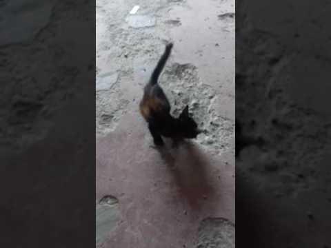 Woman pumayat sa ibabaw ng taon sa pamamagitan ng 65 kg