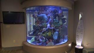 Aquarium Windows | How It's Made