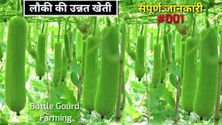 Bottle Gourd Farming | लौकी की उन्नत खेती | संपूर्ण जानकारी | Louki Ki Kheti | लोकी की खेती कैसे करे