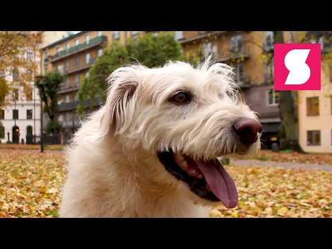 Hunden Arthur är tillbaka!