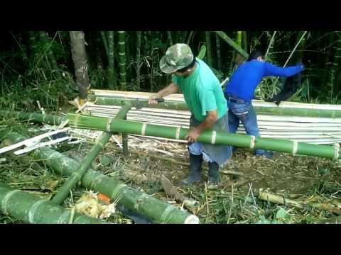 Así se saca la esterilla de bambú Guadua