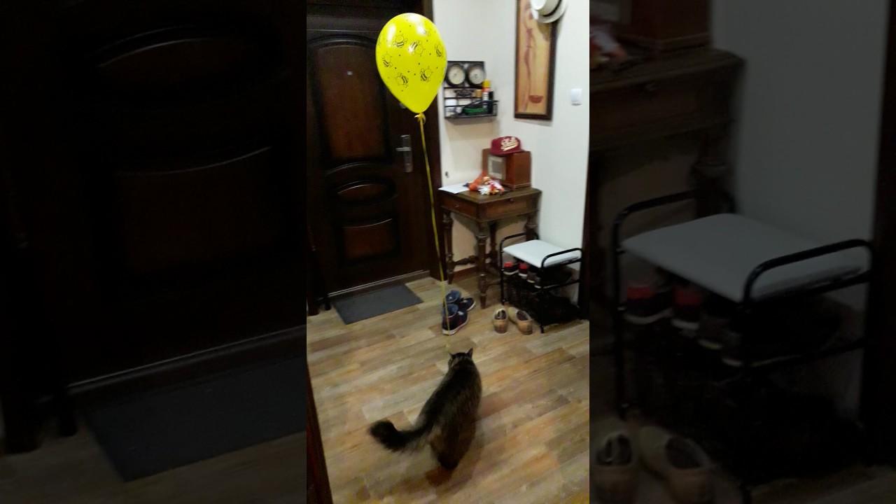 Как отвлечь кота на пару часов