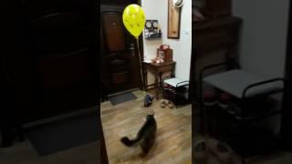 Смотреть онлайн Как занять кота надолго