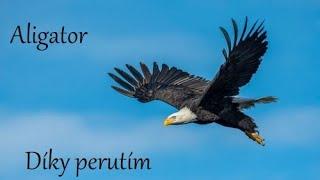 Video Díky perutím - Aligator