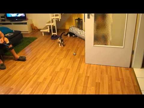 Spielrunde mit ferngesteuerter Maus
