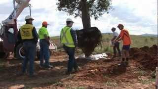 National Arboretum Canberra Receives Queensland Bottle Trees