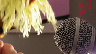 Biene Sings Whole Lotta Love