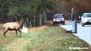Elk versus photographer  standoff caught on camera
