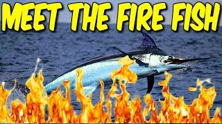 MEET THE FIRE-FISH.... SWORDFISH SPITFIRE SLAPPING! COD BLACKOUT SOLO WIN!