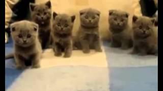Смешные прикольчики.Милые котятки.Коты смешные и прикольные