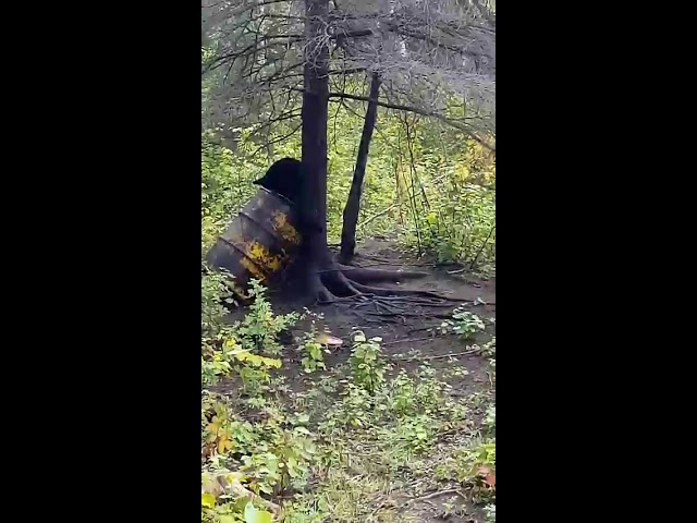 Bear Hunting Video Gallery