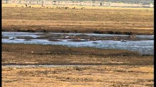 preview picture of video 'Obieżyświat - Jezioro Manyara Tanzania'