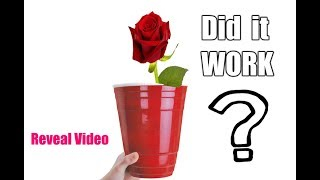 How To Grow Roses From Cuttings In A RED SOLO Cup - IT WORKED!