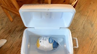How to Quickly Thaw a Frozen Turkey