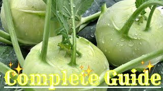 How to grow kohlrabi from seed